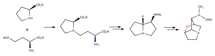Robert B  Grossman | Chemistry